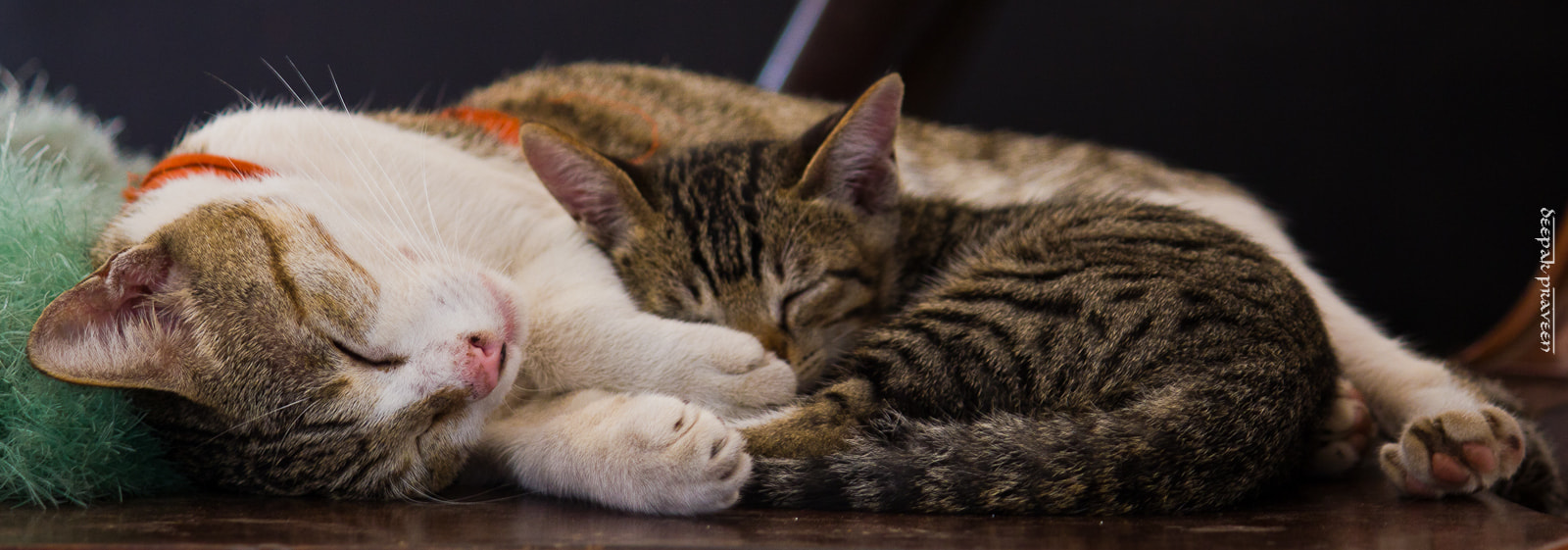 Photograph Kitty Nap by Deepak Praveen on 500px