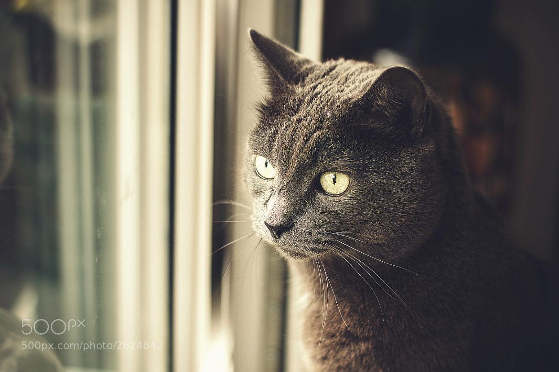 Photograph View by Daniil Tihonov on 500px