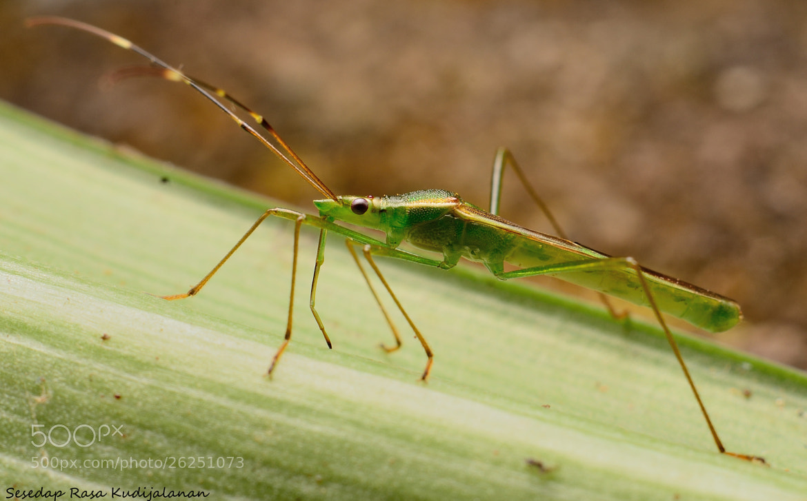 Photograph Long Leg by Sesedap Rasa Kudijalanan on 500px