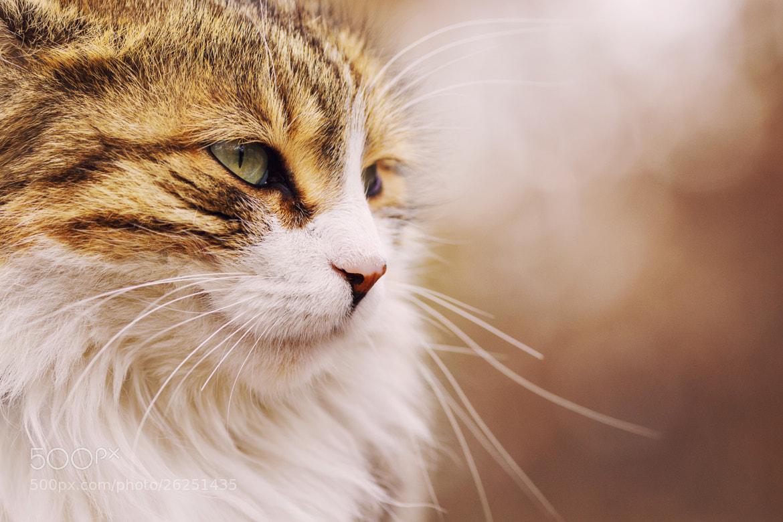 Photograph Cat I by Ömer Alp Evirgen on 500px