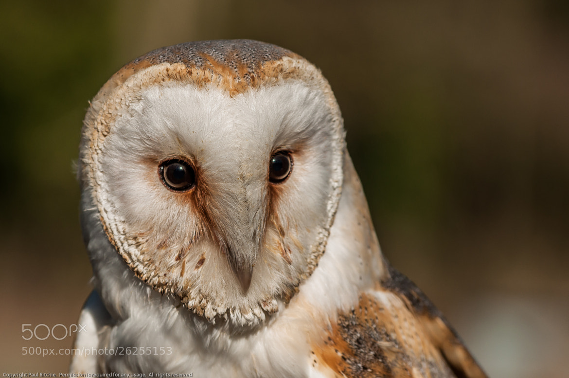 Photograph Barn Owl by Paul Ritchie on 500px