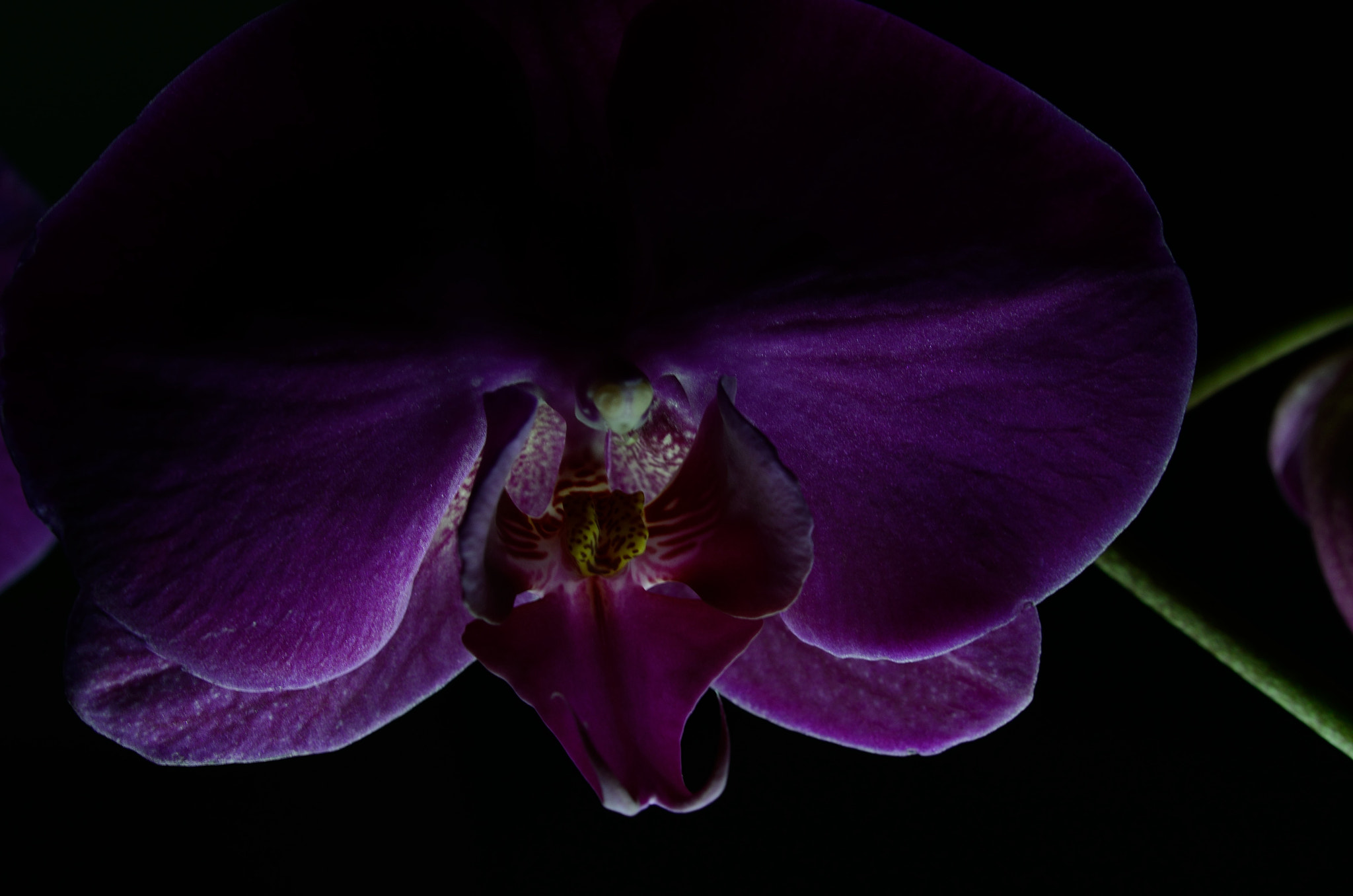 Photograph Purple Orchid by Harsh  Desai on 500px
