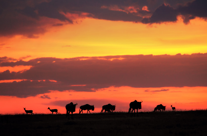 Photograph Sunset in the savannah by Juan Luis Durán on 500px