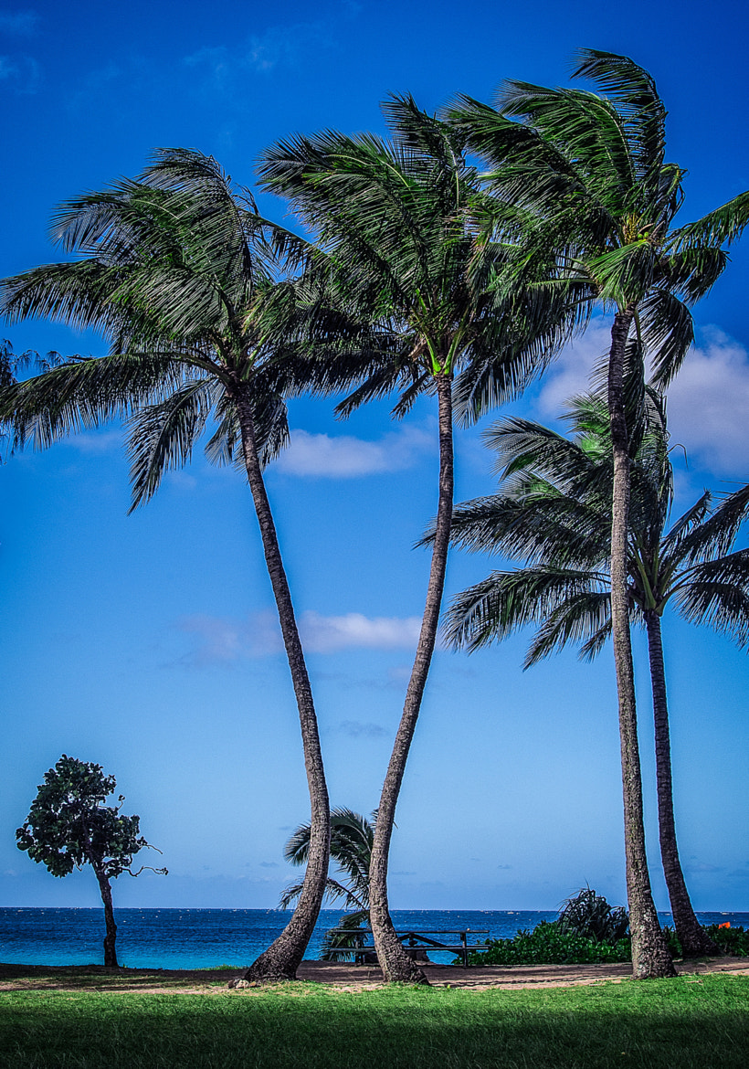 Photograph Kauai -1 by Paul Howard on 500px