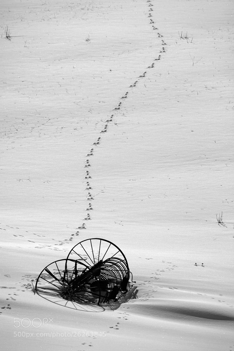 Photograph Hare marks by stefano taffoni on 500px