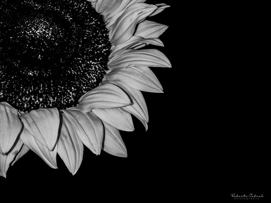 Un verso a la eternidad de Roberto Cabral │Image & Photography en 500px.com