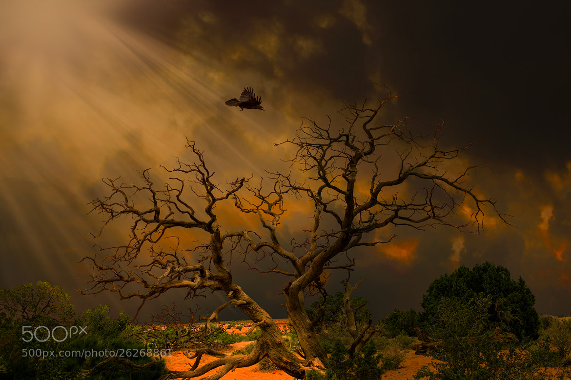 Photograph DEAD TREE by Richard Desmarais on 500px