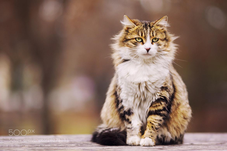 Photograph Cat II by Ömer Alp Evirgen on 500px