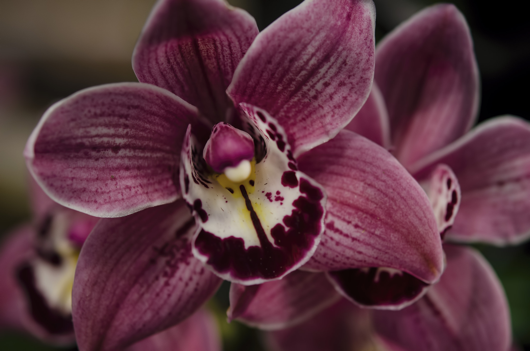 Photograph Orchid II by Harsh  Desai on 500px