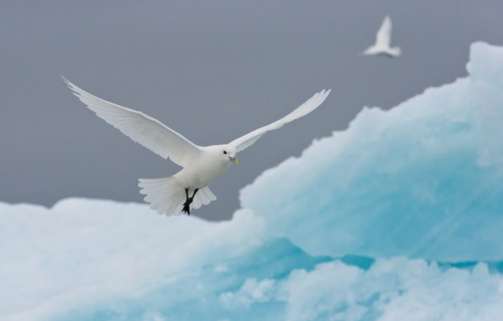 Photograph Arctic Angels by Mike Reyfman on 500px