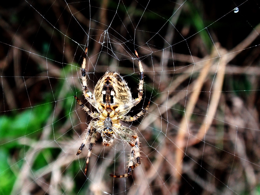 Photograph Araña - Spider by Ana MD on 500px