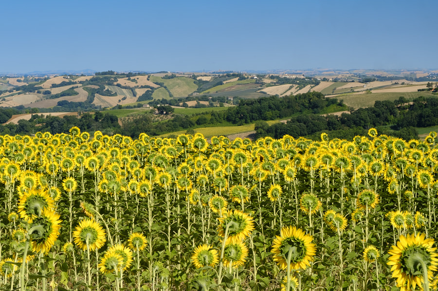 Summer landscape in Marches near Fossombrone by Claudio G. Colombo on 500px.com