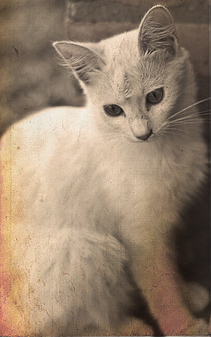 Photograph Lovely Cat by Ana  Careaga on 500px