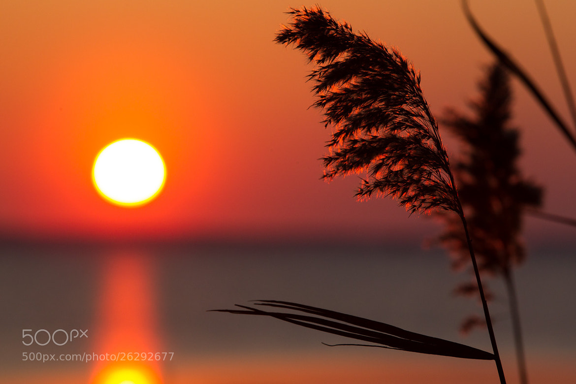 Photograph Sea Oats Sunset by Michael Lloyd on 500px