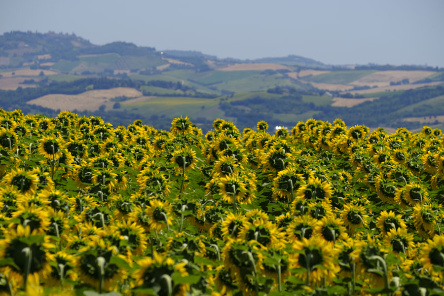 Summer landscape in Marches (Italy) near Appignano by Claudio G. Colombo on 500px.com