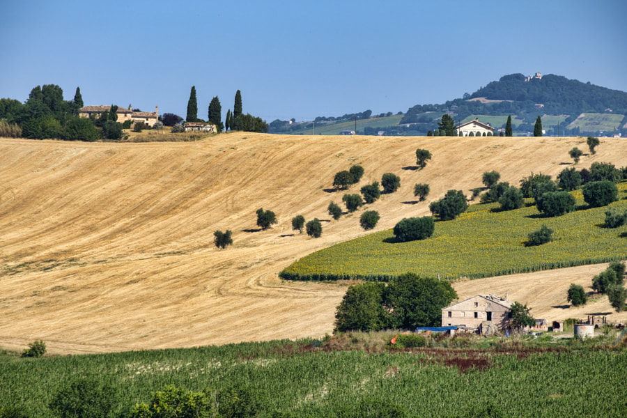 Rural landscape near Recanati (Italy) by Claudio G. Colombo on 500px.com