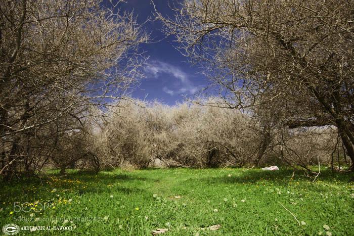 Photograph Untitled by abdulaziz ad-dawood on 500px