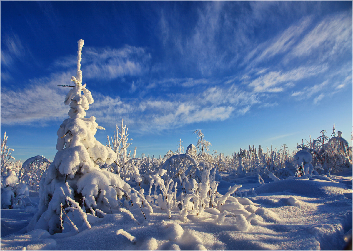 Photograph Frosty day ... by Valtteri Mulkahainen on 500px