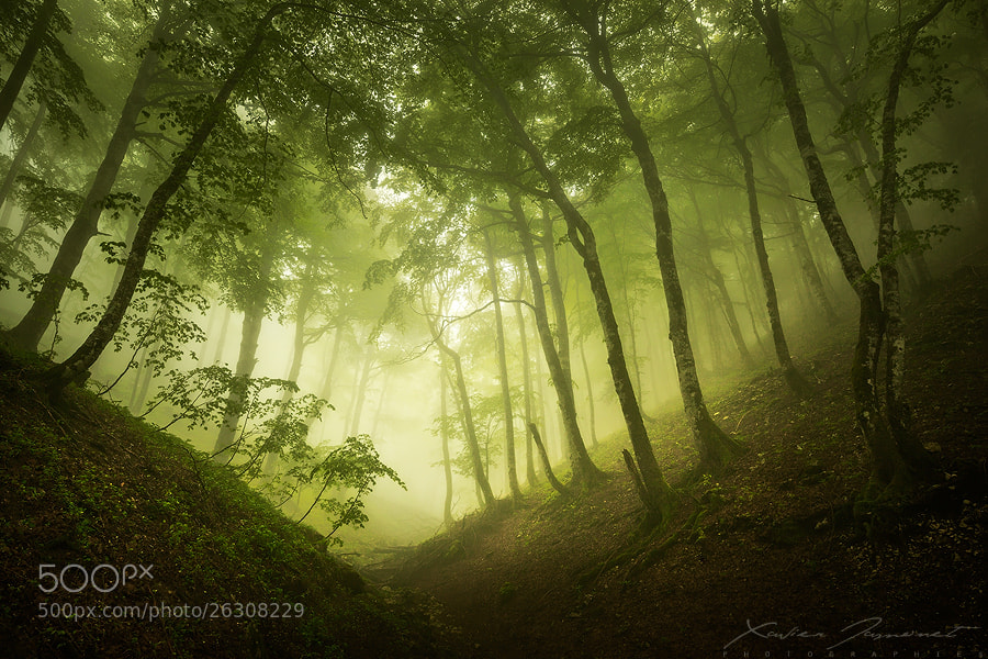 Photograph Silent forest by Xavier Jamonet on 500px