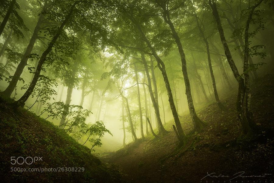 Silent forest by Xavier Jamonet (XavierJamonet)) on 500px.com
