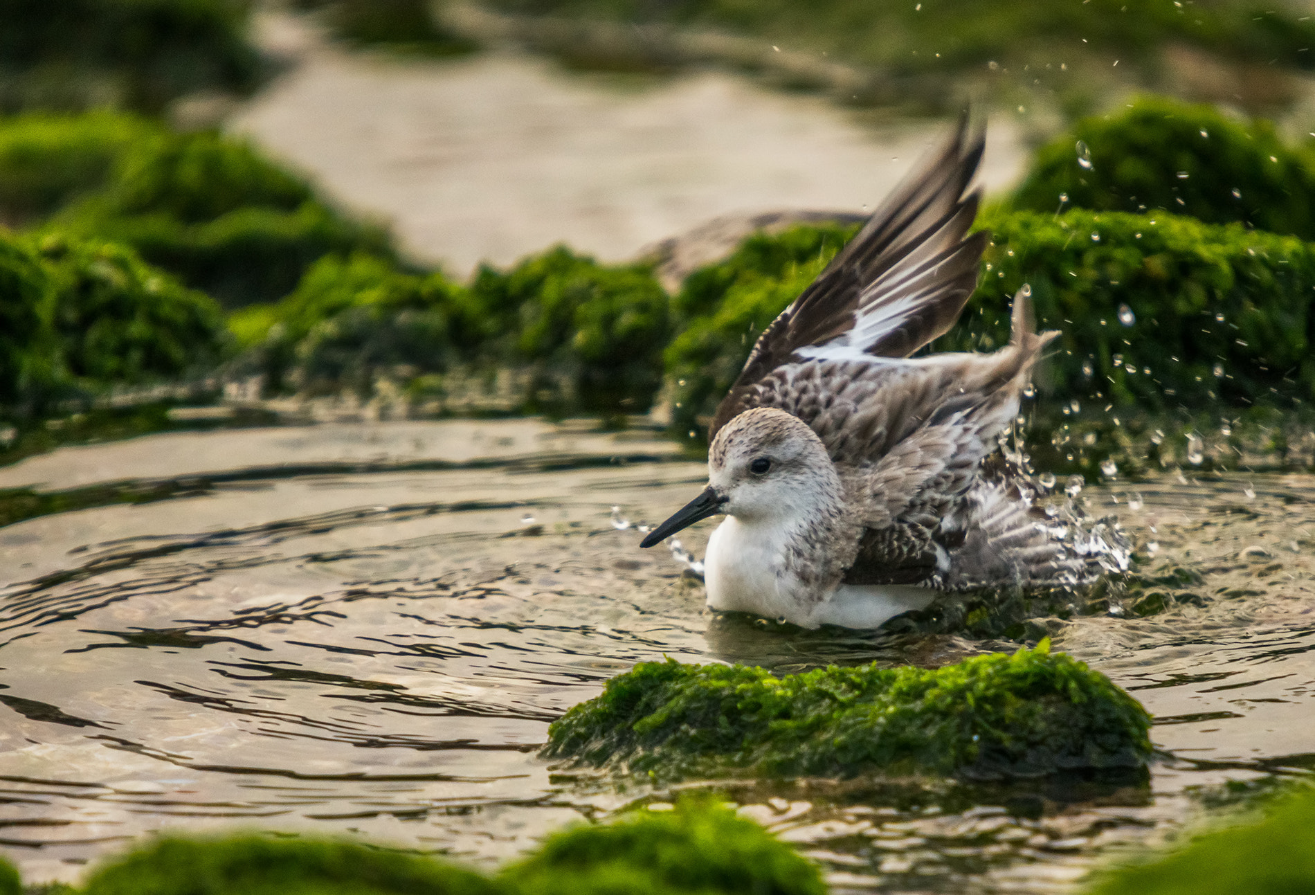 Photograph Bathing cool by Emanuel Fernandes on 500px