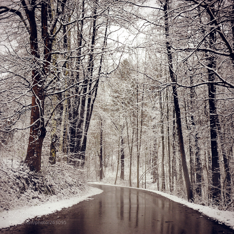 Photograph Winter series 03 by Edgar Barany on 500px