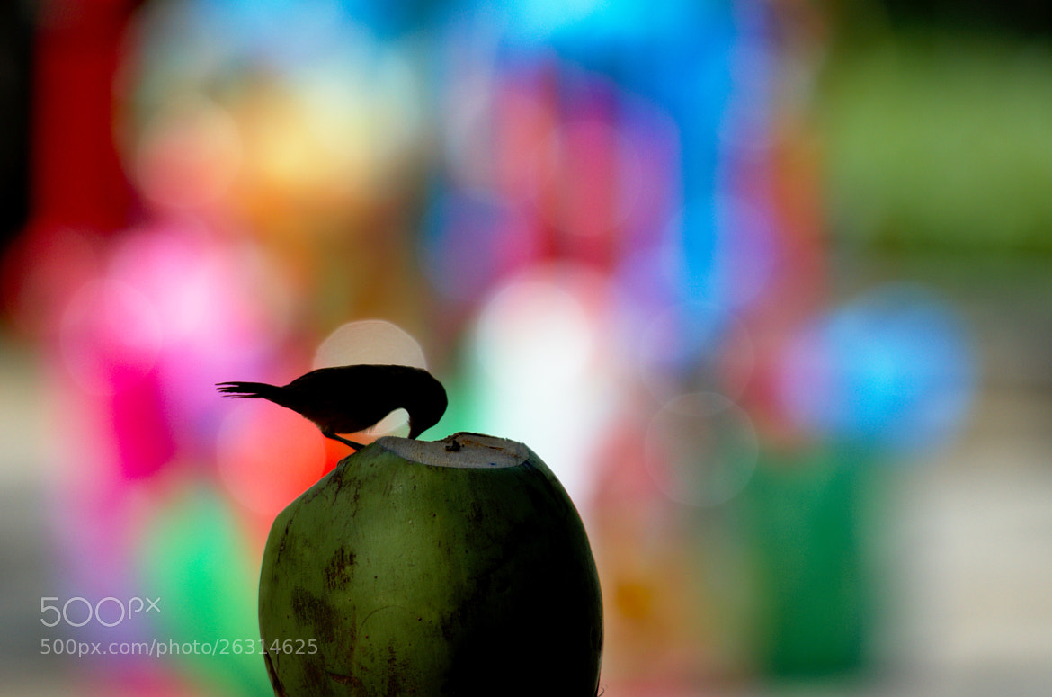 Photograph Colorful freedom by Francisco Cribari on 500px