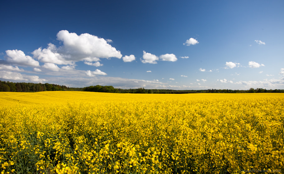 Photograph Rapeseed by Peter Jot on 500px