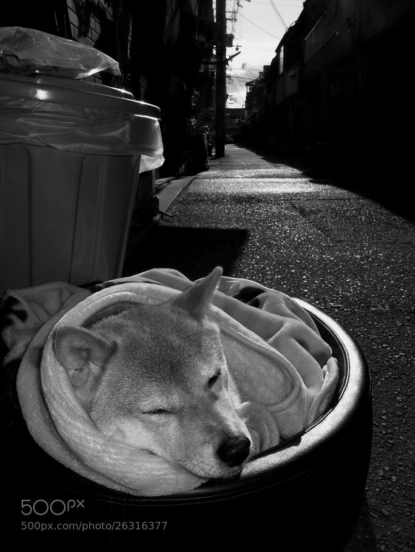Photograph nap by nakajima hiroshi on 500px