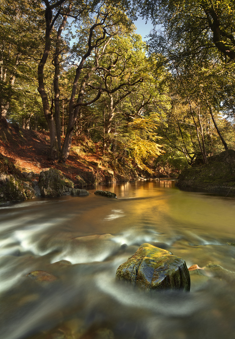 Photograph Golden Flow by Gary McParland on 500px