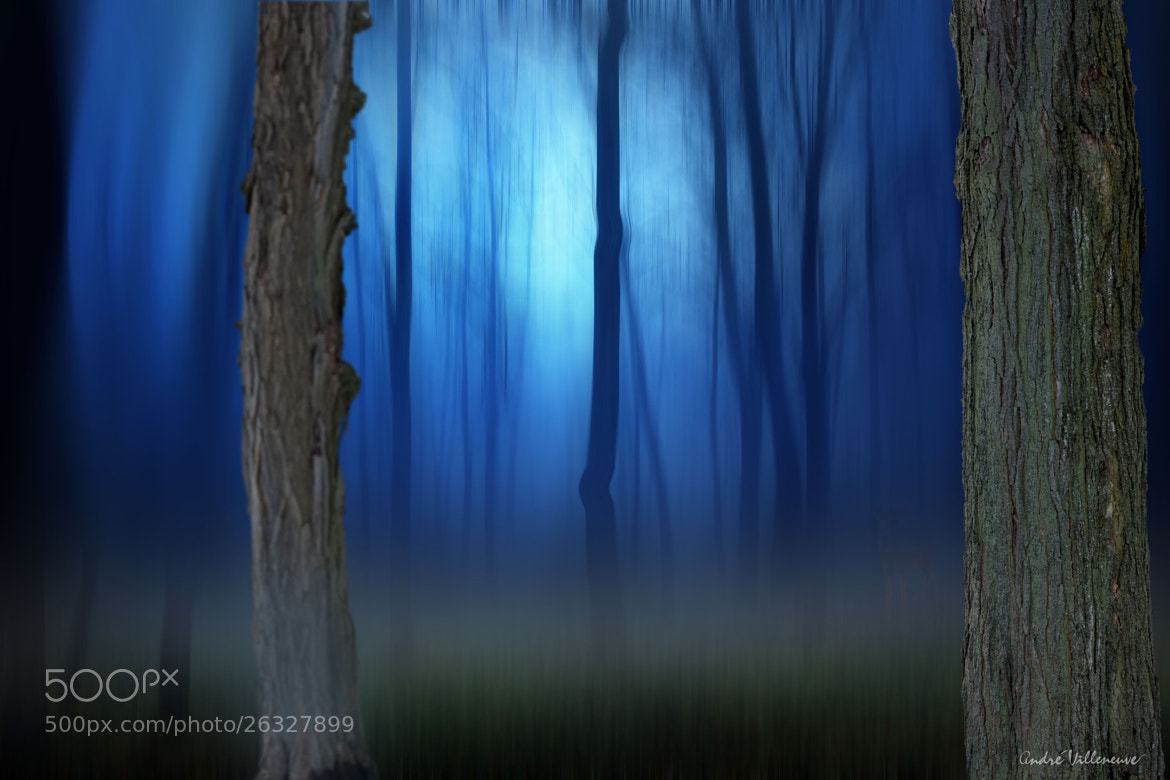 Photograph The blue fog by Andre Villeneuve on 500px