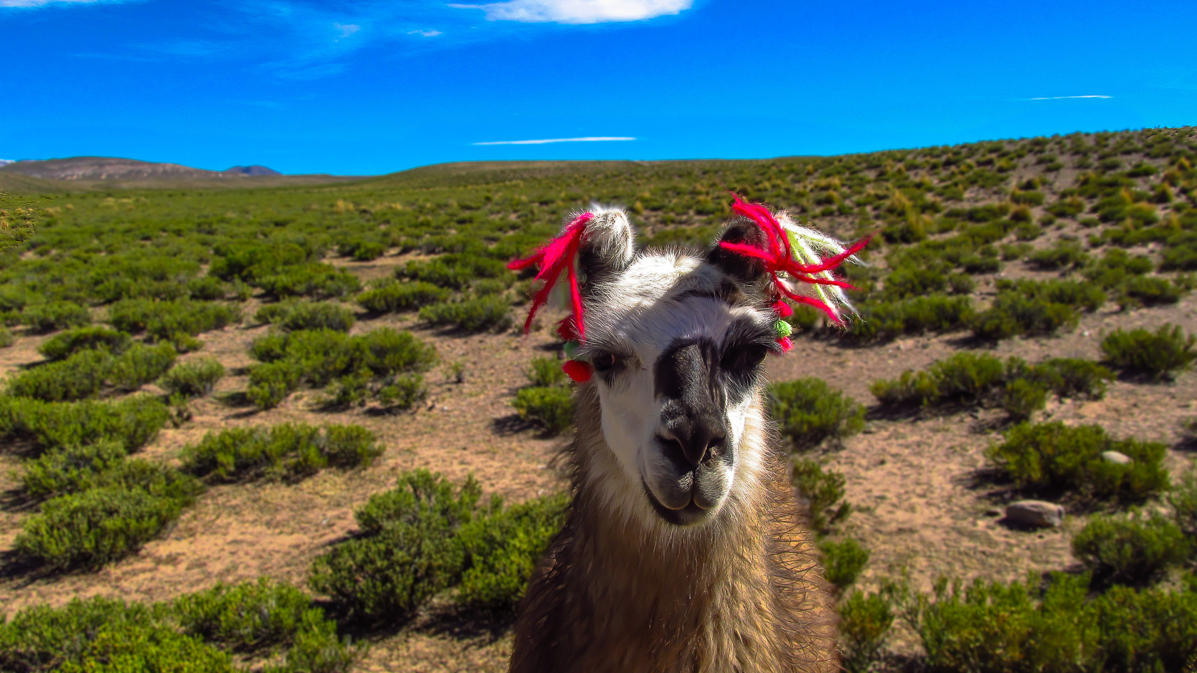 Photograph Friendly Llama by eyals  on 500px