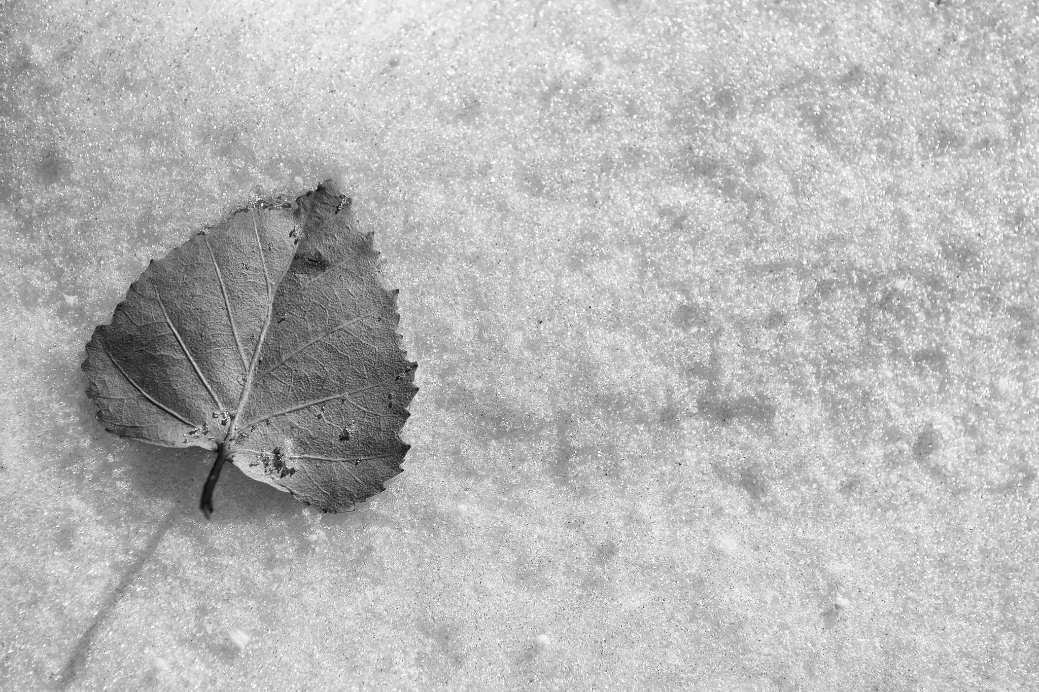 Photograph Leaf and snow by Salvo Mangiaglia on 500px