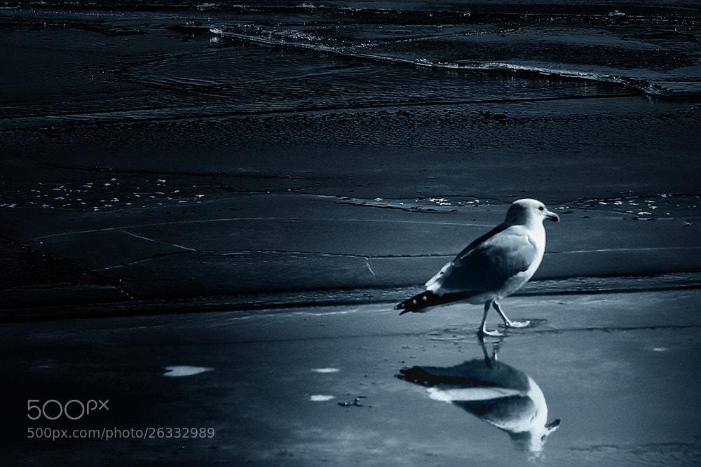 Photograph I walk alone... by Leila Raymond on 500px