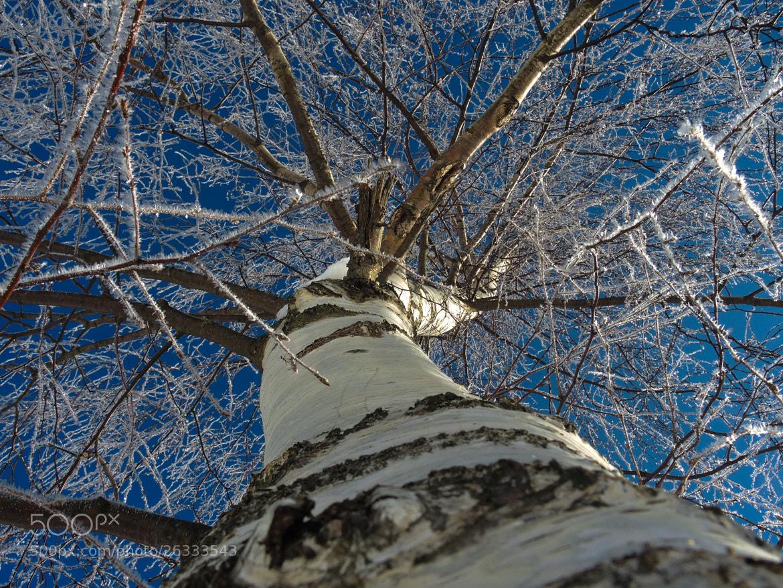Photograph Frozen tree by Aurélie Cornu on 500px