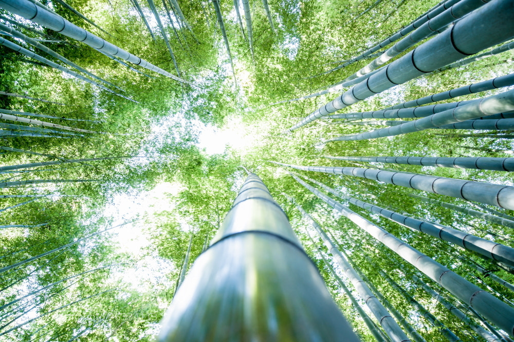Photograph Bamboo Light by Takeshi Marumoto on 500px