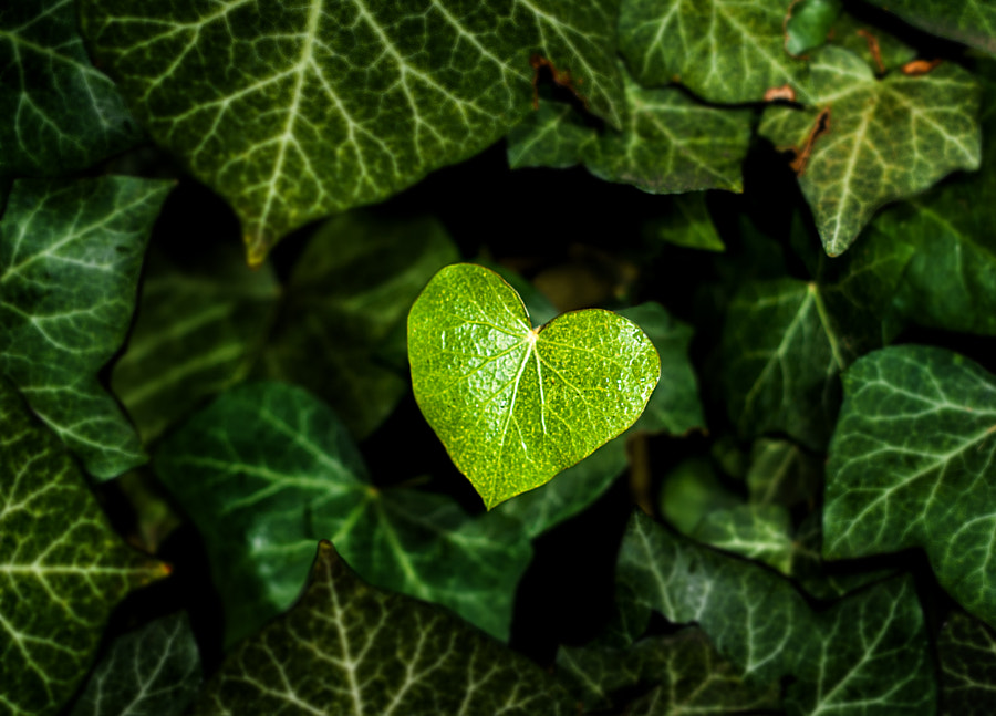 Photograph Green Heart by NICOLAI BÖNIG on 500px