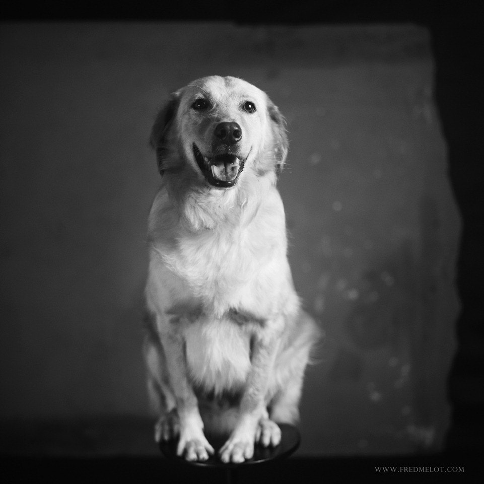 Photograph Louis by Fred Melot on 500px
