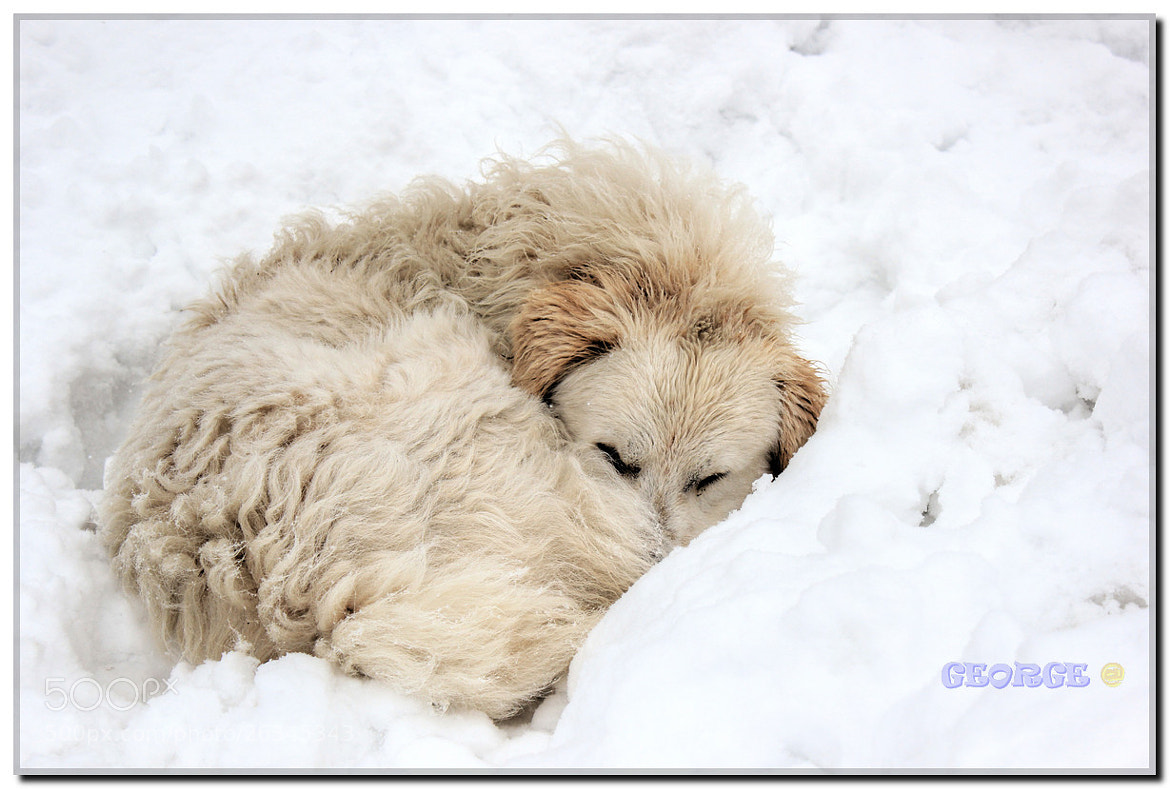 Photograph frozen in my bed !!! by George @ papaki on 500px
