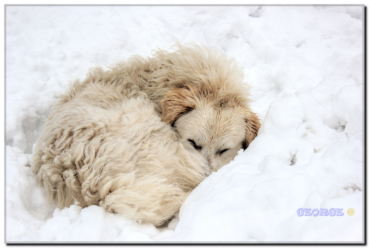 Photograph frozen in my bed !!! by George @  on 500px
