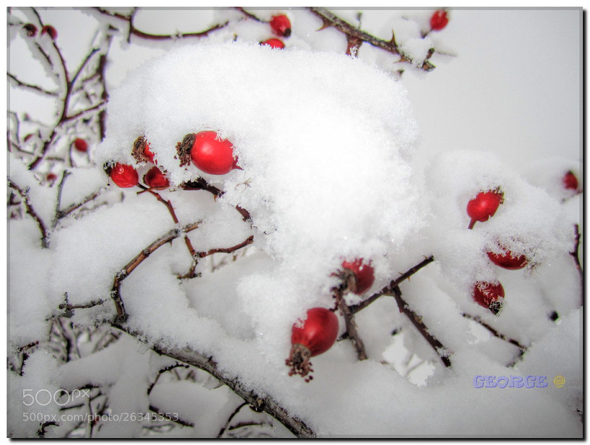 Photograph the snowy red passion .  by George @ papaki on 500px