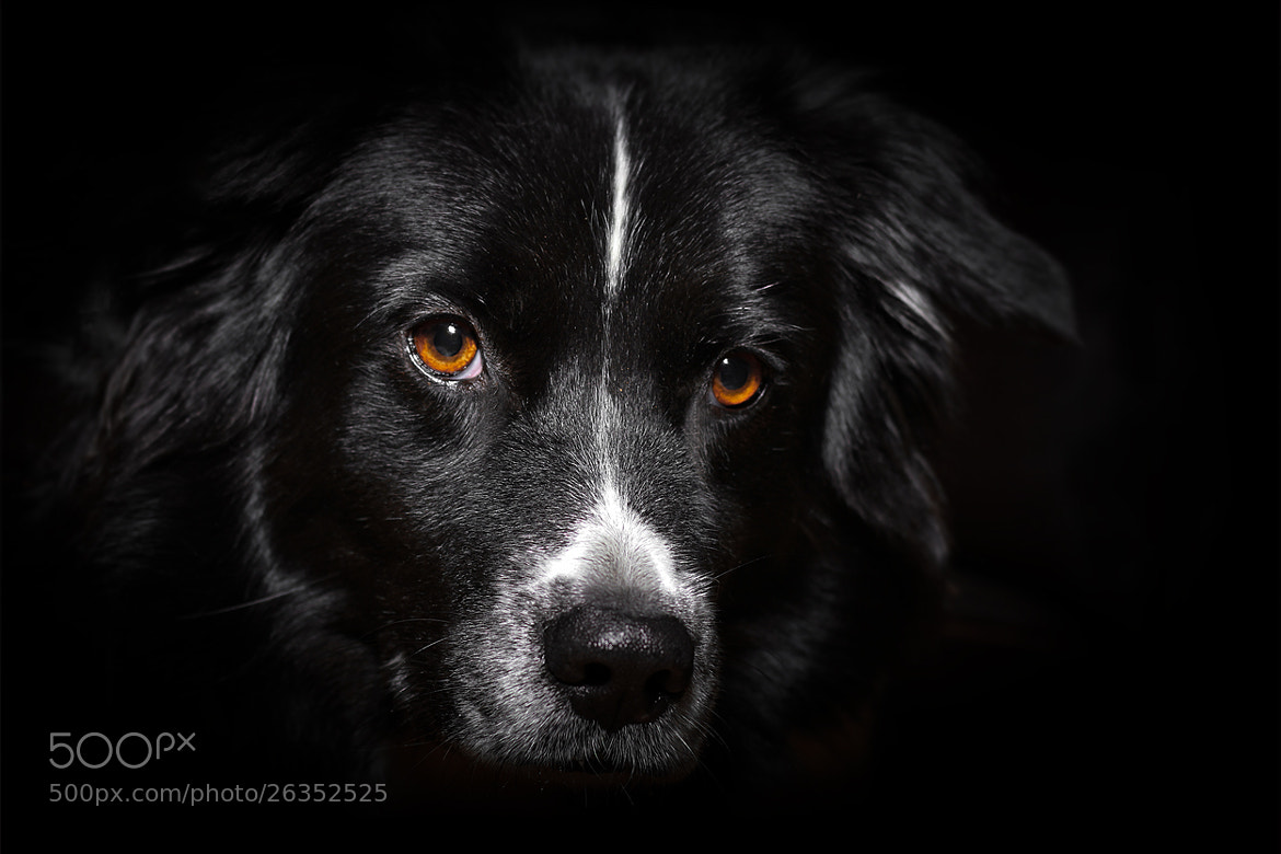 Photograph golden eyes by Mathias Ahrens on 500px