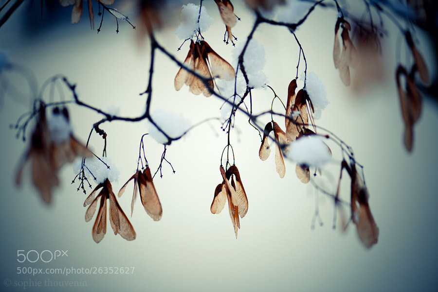 Photograph Migration by sophie thouvenin on 500px