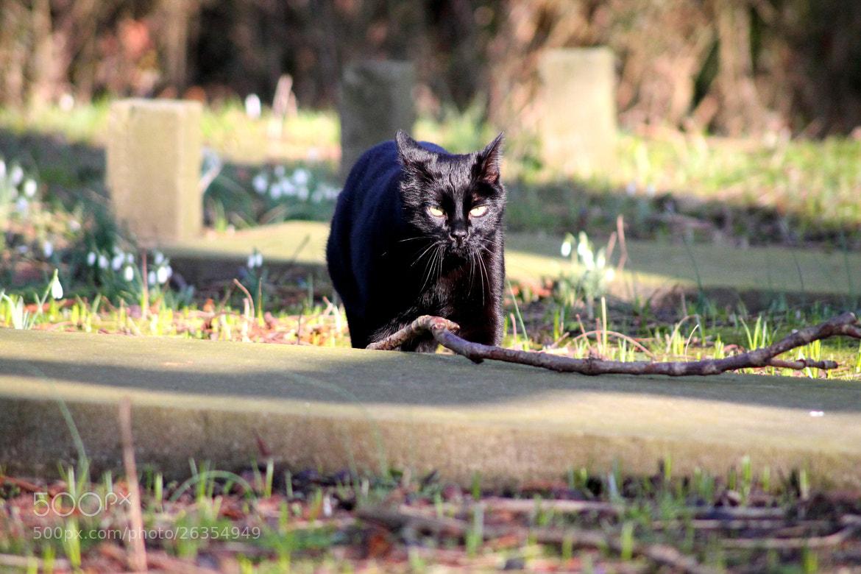 Photograph Graveyard cat by Mirjam Warner on 500px
