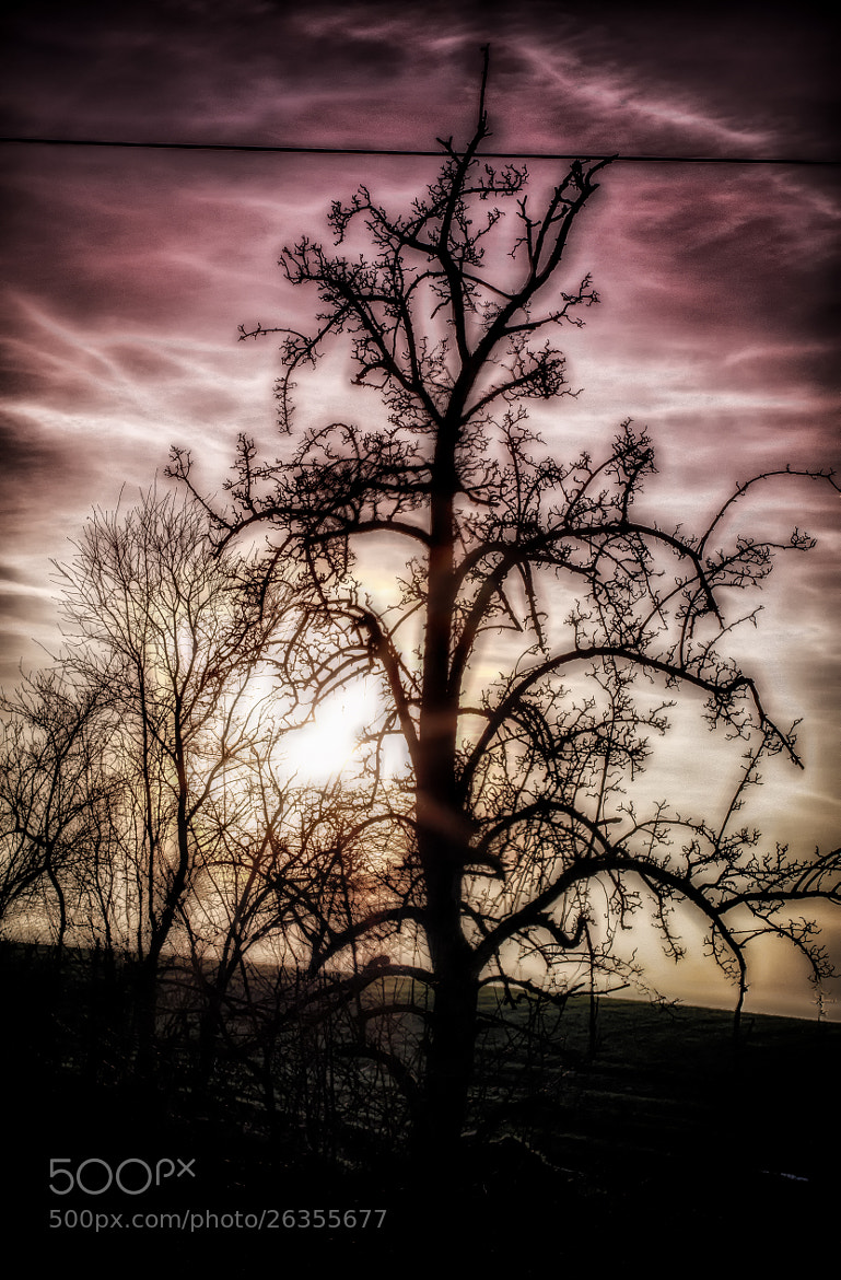 Photograph Tree by Marcel Quoos on 500px