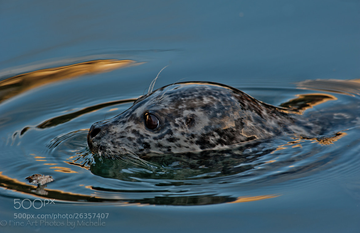 Photograph Seal Profile by Michelle Stevenson on 500px