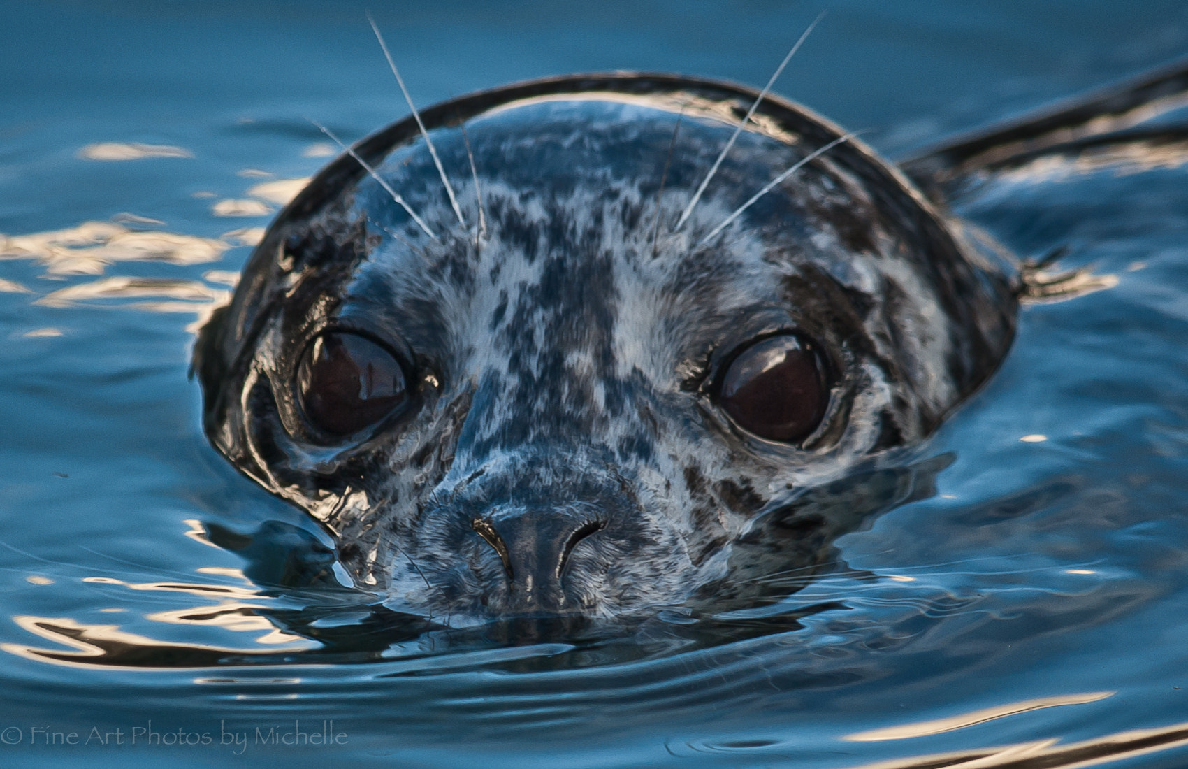 Photograph Seal Head Shot by Michelle Stevenson on 500px