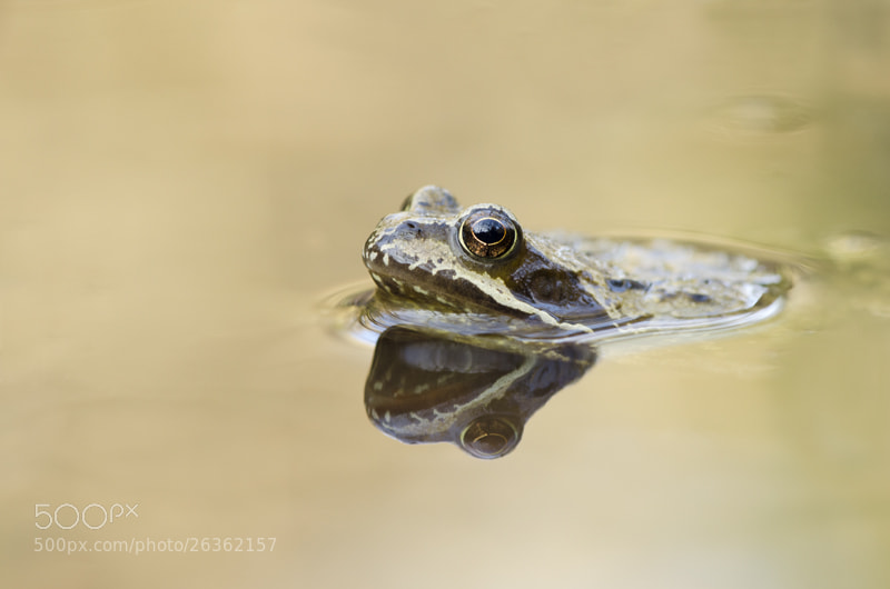 Photograph Common frog by Elinor James on 500px