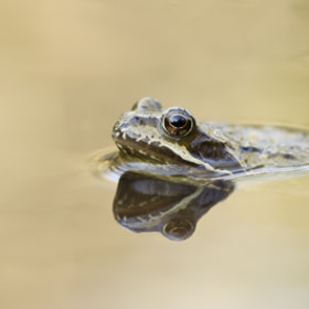 Common frog by Elinor James (eljames)) on 500px.com
