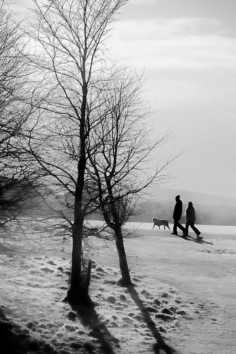 Photograph A Walk in the Park by Anne Costello on 500px